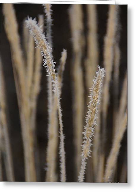 Ice Crystals On Tall Grass Greeting Card by Mick Anderson