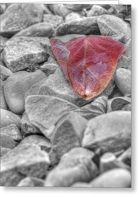 Ice On A Leaf Greeting Card by Lisa Knechtel