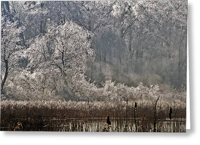 Ice Storm 2008 Greeting Card
