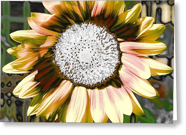 Iced Oatmeal Cookie Sunflower Greeting Card by Devalyn Marshall
