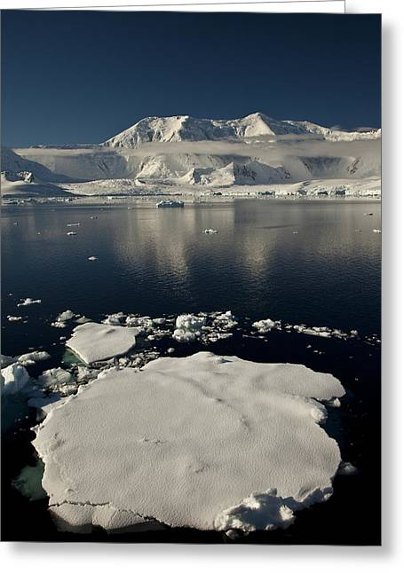 Icefloe In The Neumayer Channel Greeting Card by Colin Monteath