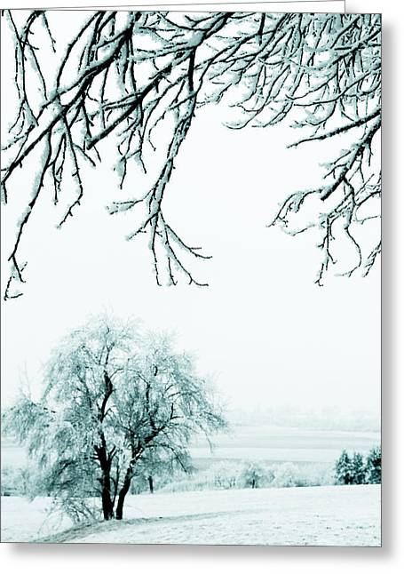Icy Branches Greeting Card by Nicole Neuefeind