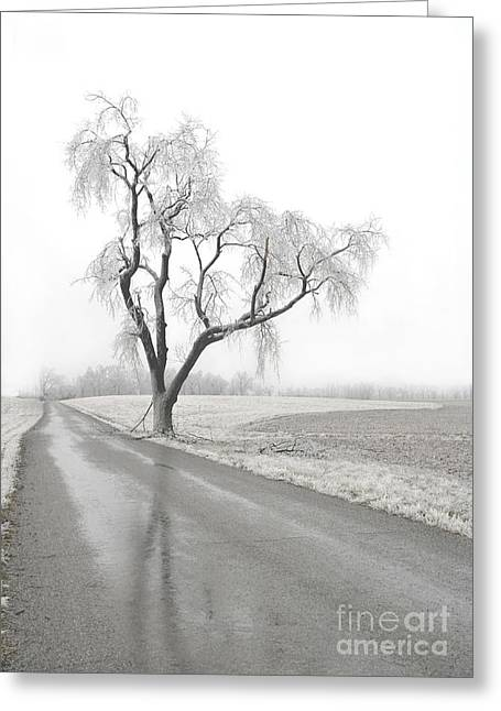 Icy Tree Greeting Card by Glennis Siverson