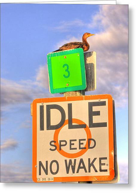 Idle Sitting Greeting Card by Barry R Jones Jr
