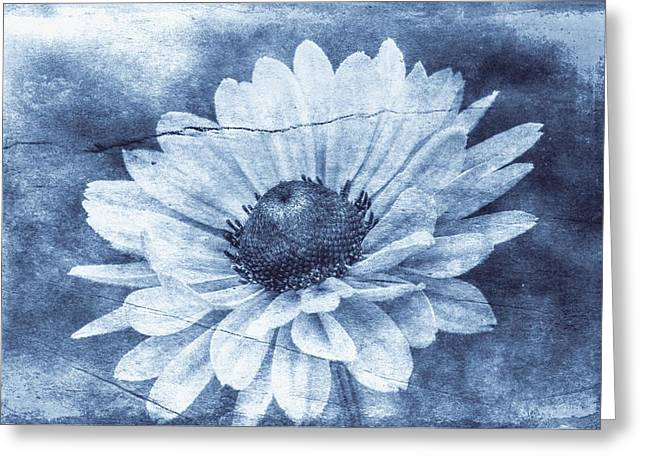 If Daisies Wore Blue Jeans Greeting Card by Christine Annas