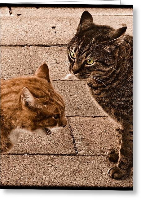 Albuquerque, New Mexico - If Looks Could Kill Greeting Card