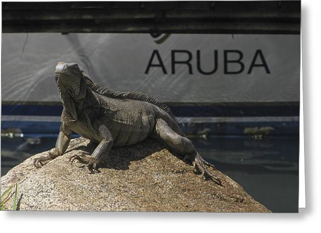 Greeting Card featuring the photograph Iguana by David Gleeson