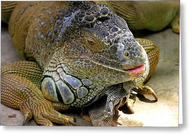 Iguana Iguana Greeting Card by Anne Gordon