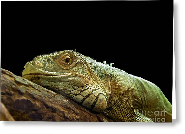 Iguana Greeting Card by Jane Rix