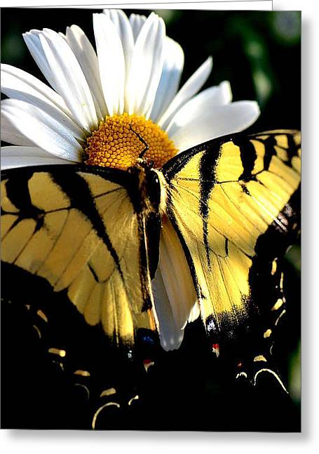 Greeting Card featuring the photograph I'm A Beauty Fly by Tanya Tanski