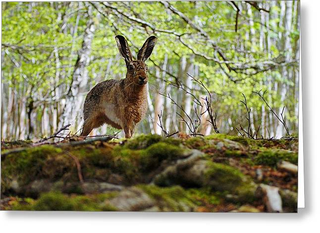 Greeting Card featuring the photograph I'm All Ears by Gavin Macrae