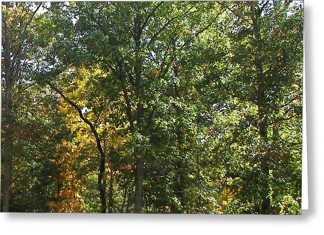 Greeting Card featuring the photograph Image Of Fall by Pamela Hyde Wilson