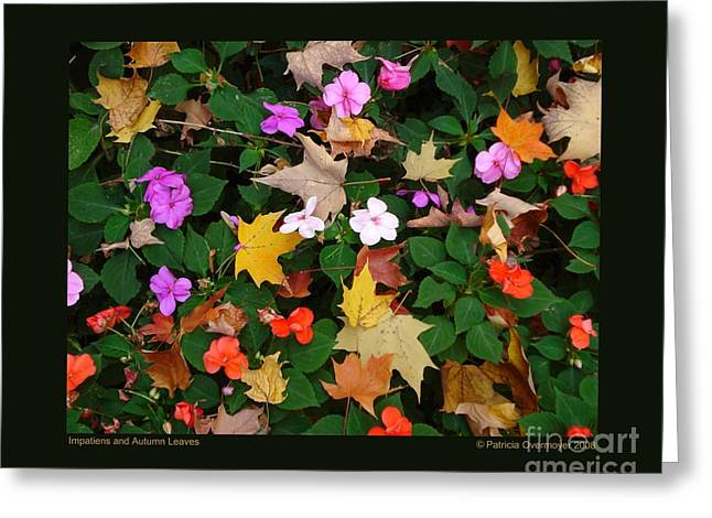 Impatiens And Autumn Leaves Greeting Card by Patricia Overmoyer