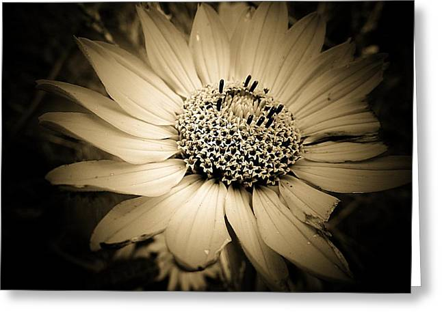 Imperfection Greeting Card by Beth Akerman
