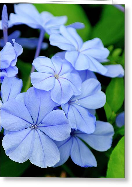 Imperial Blue Greeting Card