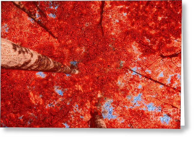 Impression Of Red Maple Greeting Card by Charline Xia