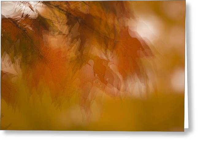 Impressionistic Maple Greeting Card