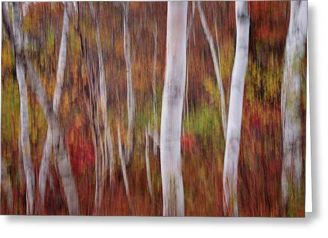 Abstract Impressions Vermont Birch Forest  Greeting Card by Thomas Schoeller