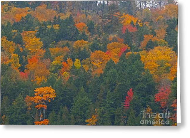 Imprssions Of Autumn Greeting Card by Charles  Ridgway