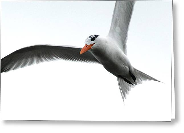 In Flight Greeting Card by Kathy Gibbons
