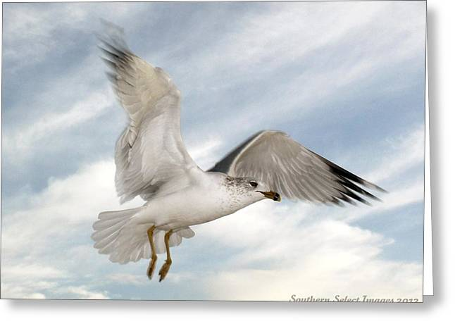 In Flight Greeting Card by Sharon Ventimiglia