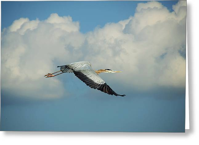 In Flight Greeting Card by Steven  Michael