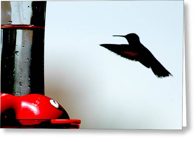 Greeting Card featuring the photograph In Flight by Wanda Brandon