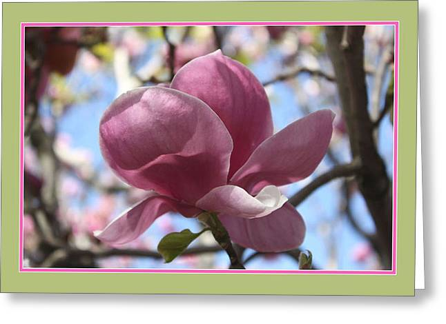 In Full Bloom Greeting Card by Susan Alvaro