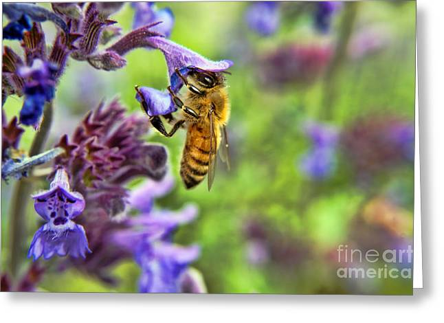 In Search Of Pollen Greeting Card by Craig Ebel