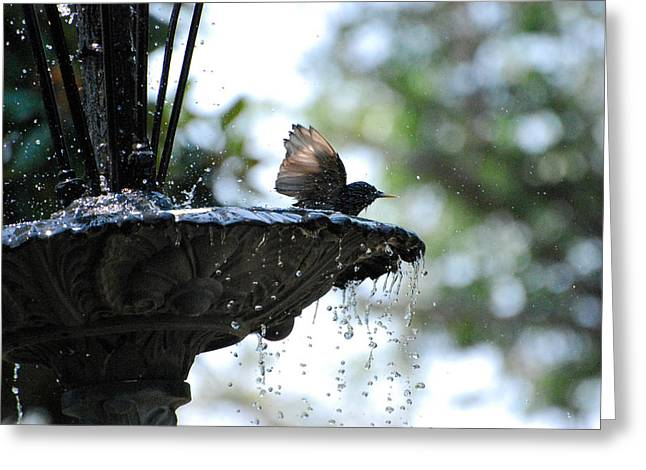 Greeting Card featuring the photograph In The Cool Of The Morning #2 by Linda Cox