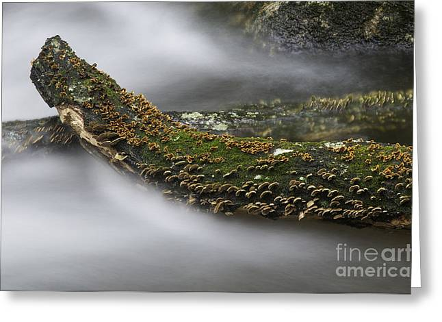 In The Flow Greeting Card by David Waldrop
