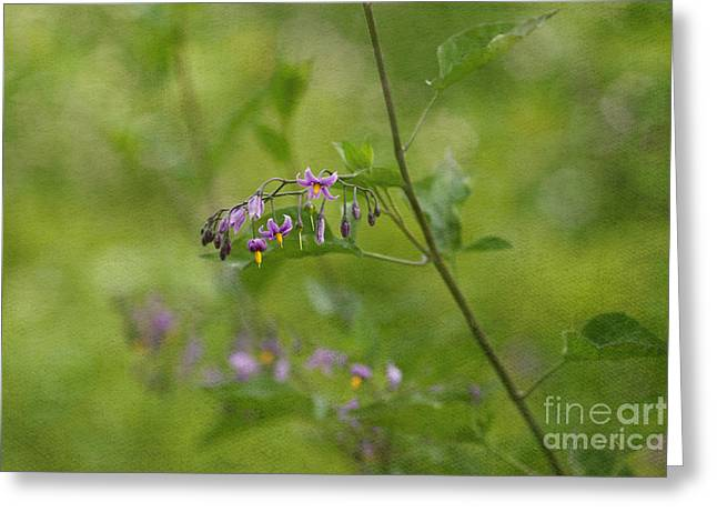 In The Garden Greeting Card by Beve Brown-Clark Photography