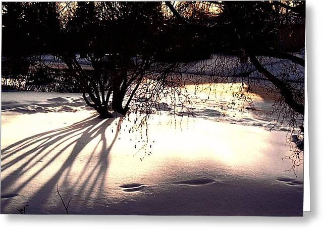 In The Night Greeting Card by Shirley Sirois