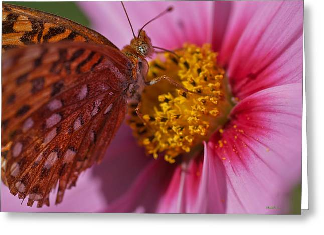 In The Pink Greeting Card by Mitch Shindelbower