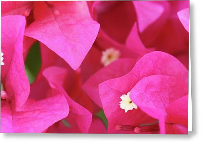 In The Pink Today Greeting Card by Andrea  OConnell