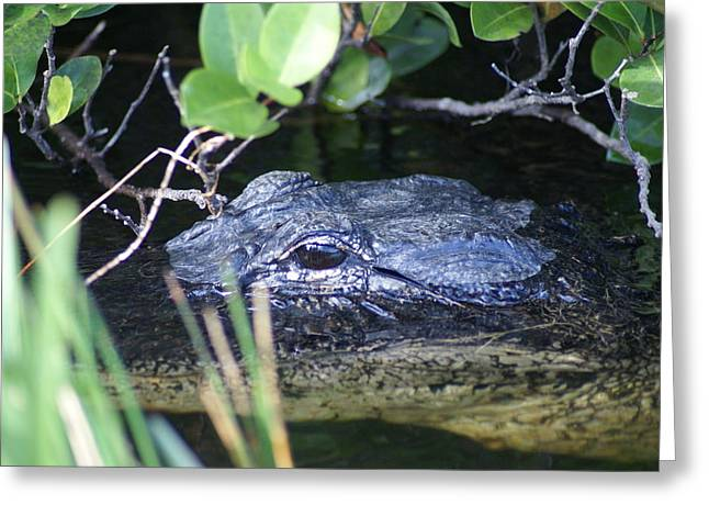 Greeting Card featuring the photograph In The Swamp by Jerry Cahill