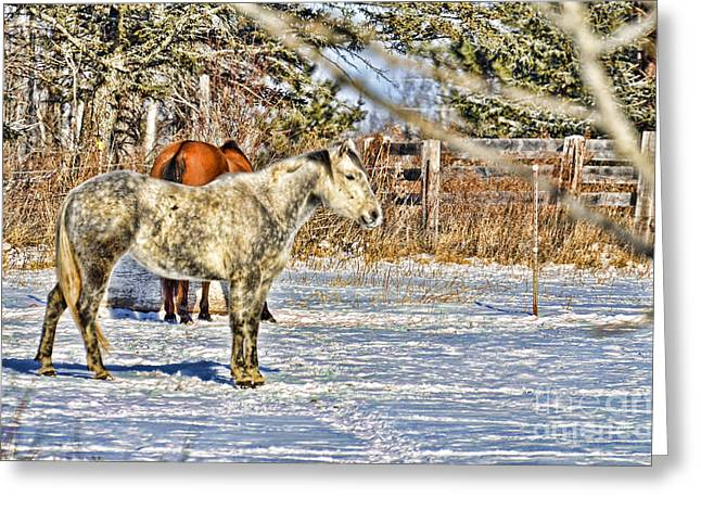 In The Yard Greeting Card by Whispering Feather Gallery