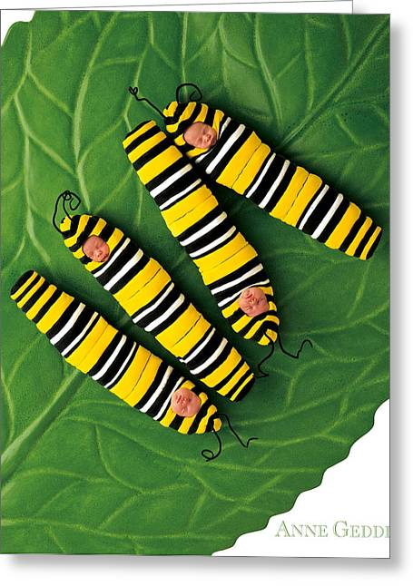 Caterpillar Greeting Cards - Inch Worms Greeting Card by Anne Geddes