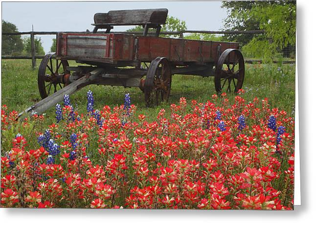 Indian Paintbrush And Wagon Greeting Card