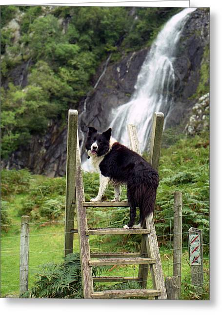 Indy At Aber Falls Greeting Card by Michael Haslam