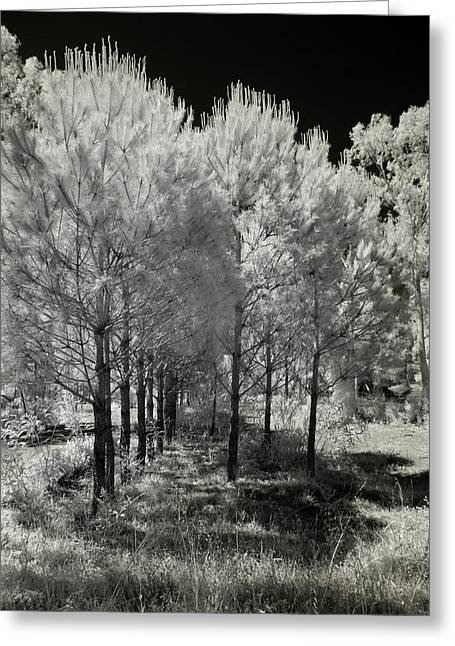 Infrared Trees Greeting Card by Stavros Argyropoulos