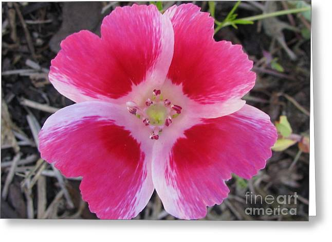 Ingenious Photography Greeting Card by Tina Marie