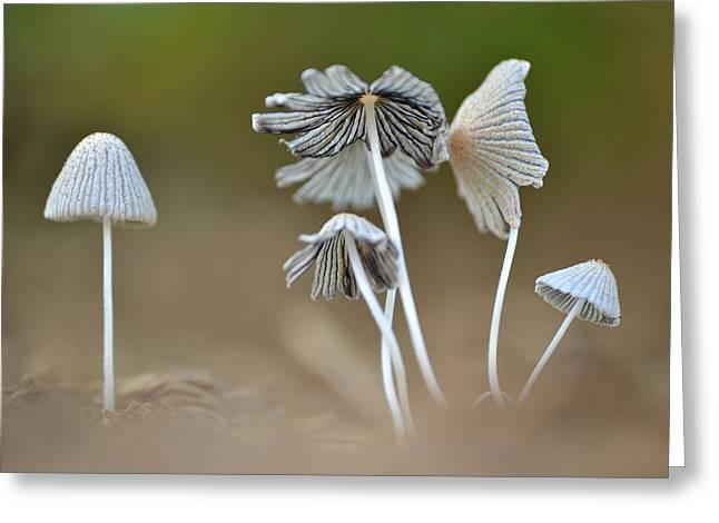 Ink-cap Mushrooms Greeting Card