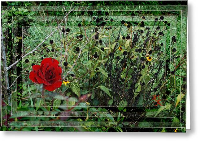 Inner Layers Greeting Card by Kelly Rader