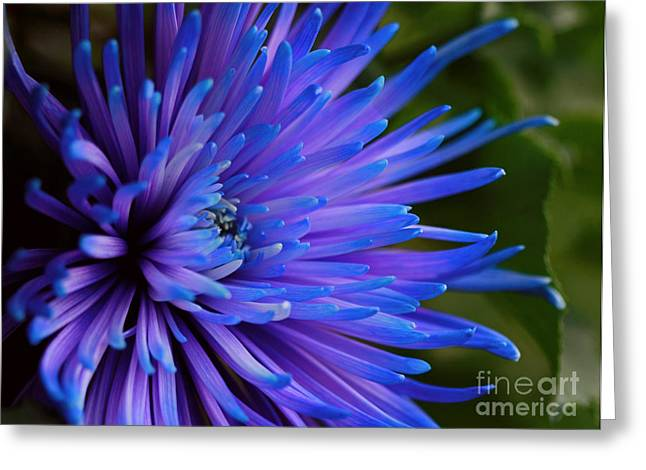 Inner Magic Greeting Card by Inspired Nature Photography Fine Art Photography