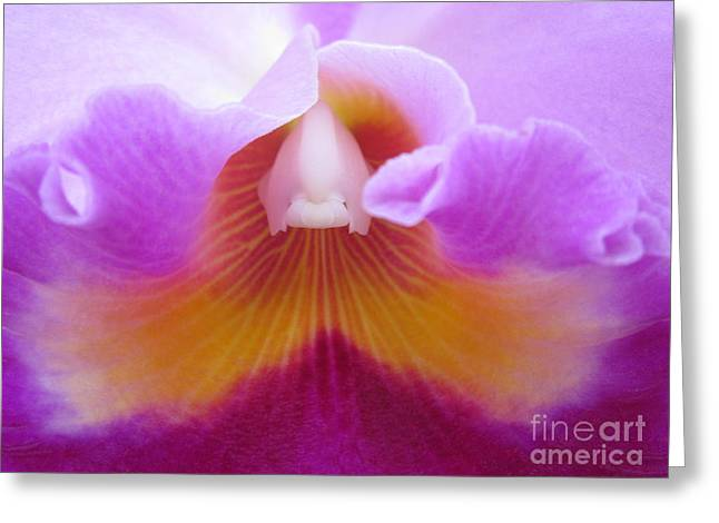 Inside An Orchid's Heart Greeting Card by Judee Stalmack