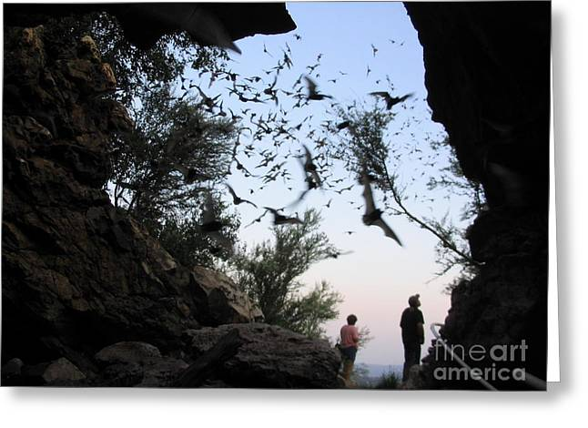 Inside The Bat Cave Greeting Card