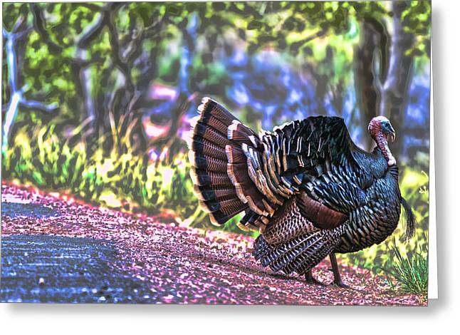 Intense Tom Turkey Display Greeting Card by Gregory Scott