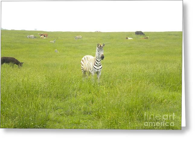 Interested Greeting Card by Tessa Priddy