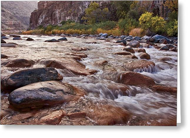Intimate Waters On The Salt River Greeting Card by Dave Dilli